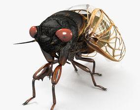 3D Cicada HD