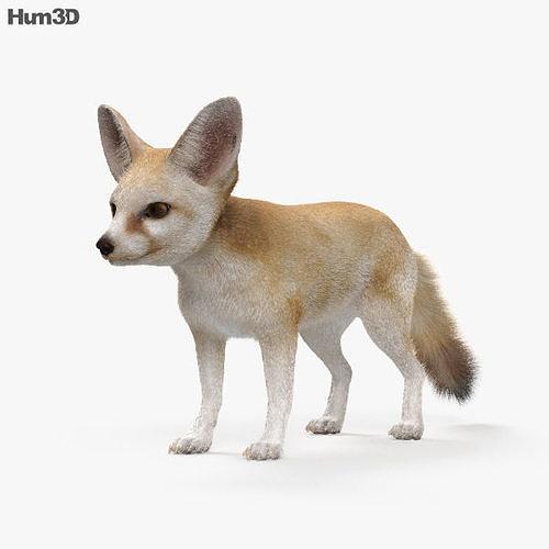 fennec fox hd 3d model max obj mtl 3ds fbx c4d lwo lw lws 1