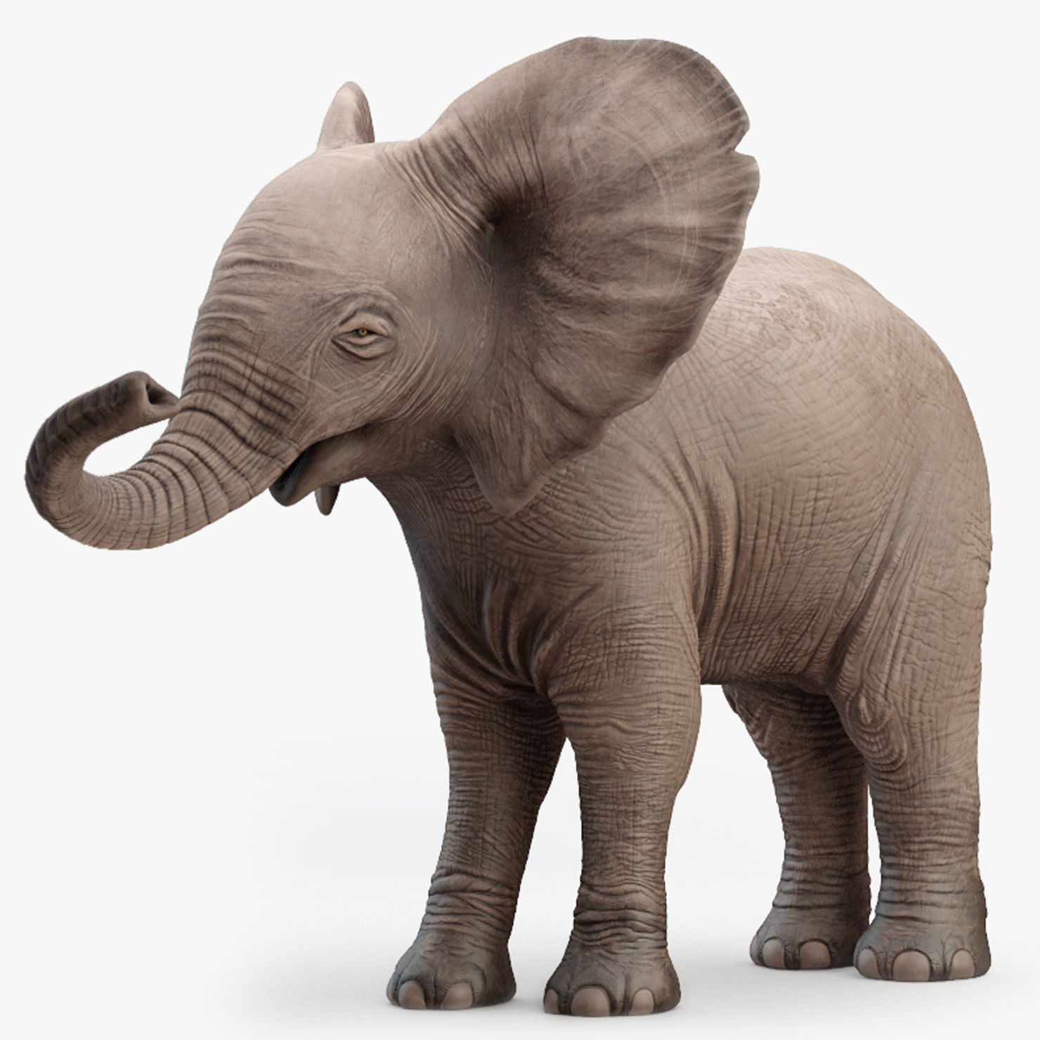 Elephant Baby Rigged 8K