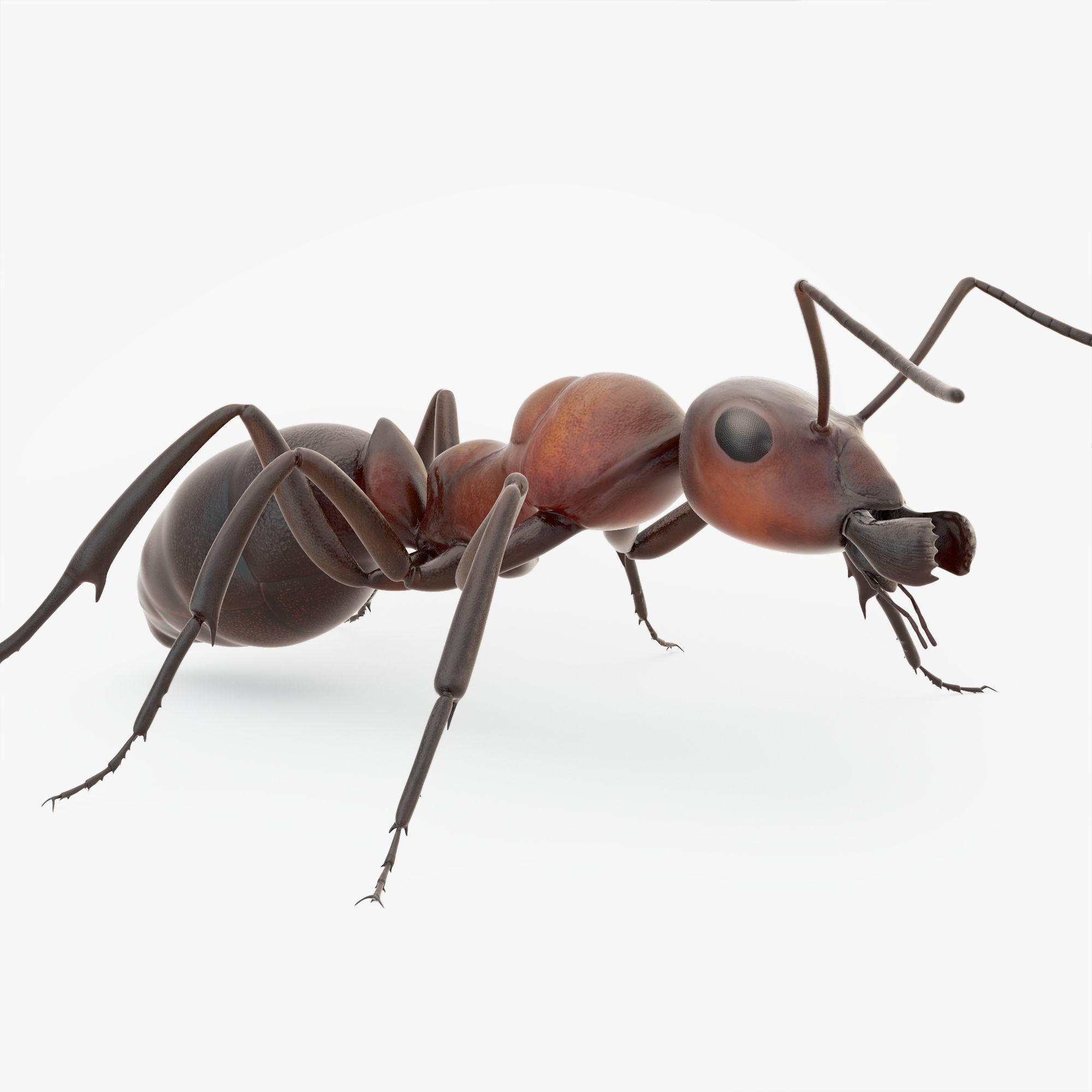 Rigged Ant