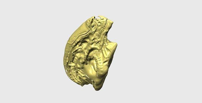 Newborn Alien - Alien Sapien - Head