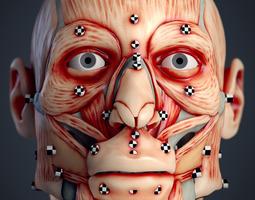 3d print model cranial facial reconstruction - european male facial muscle