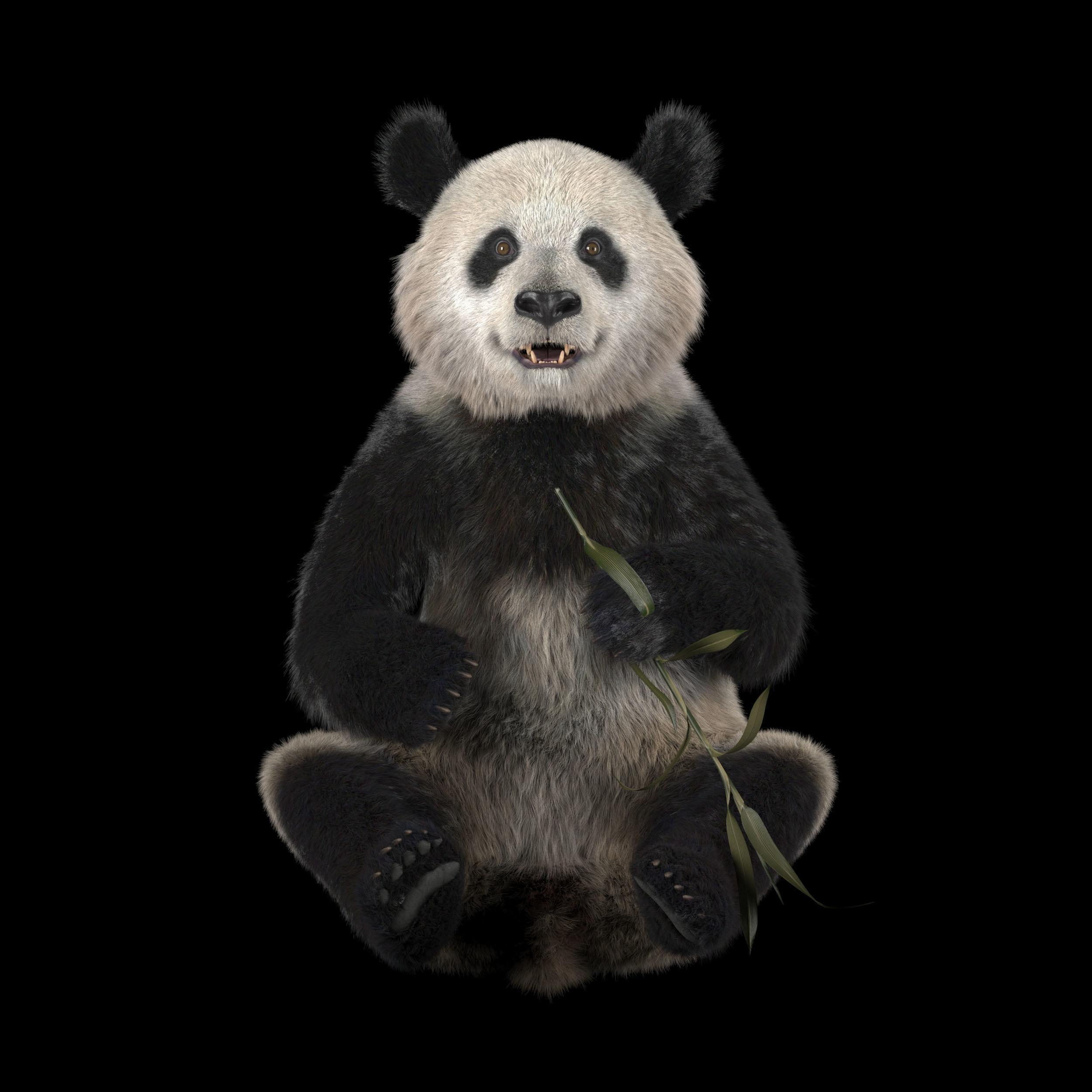 Download 89+ Gambar Panda 3d Keren Gratis