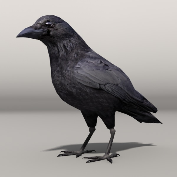 3D Asset Lowpoly Crow