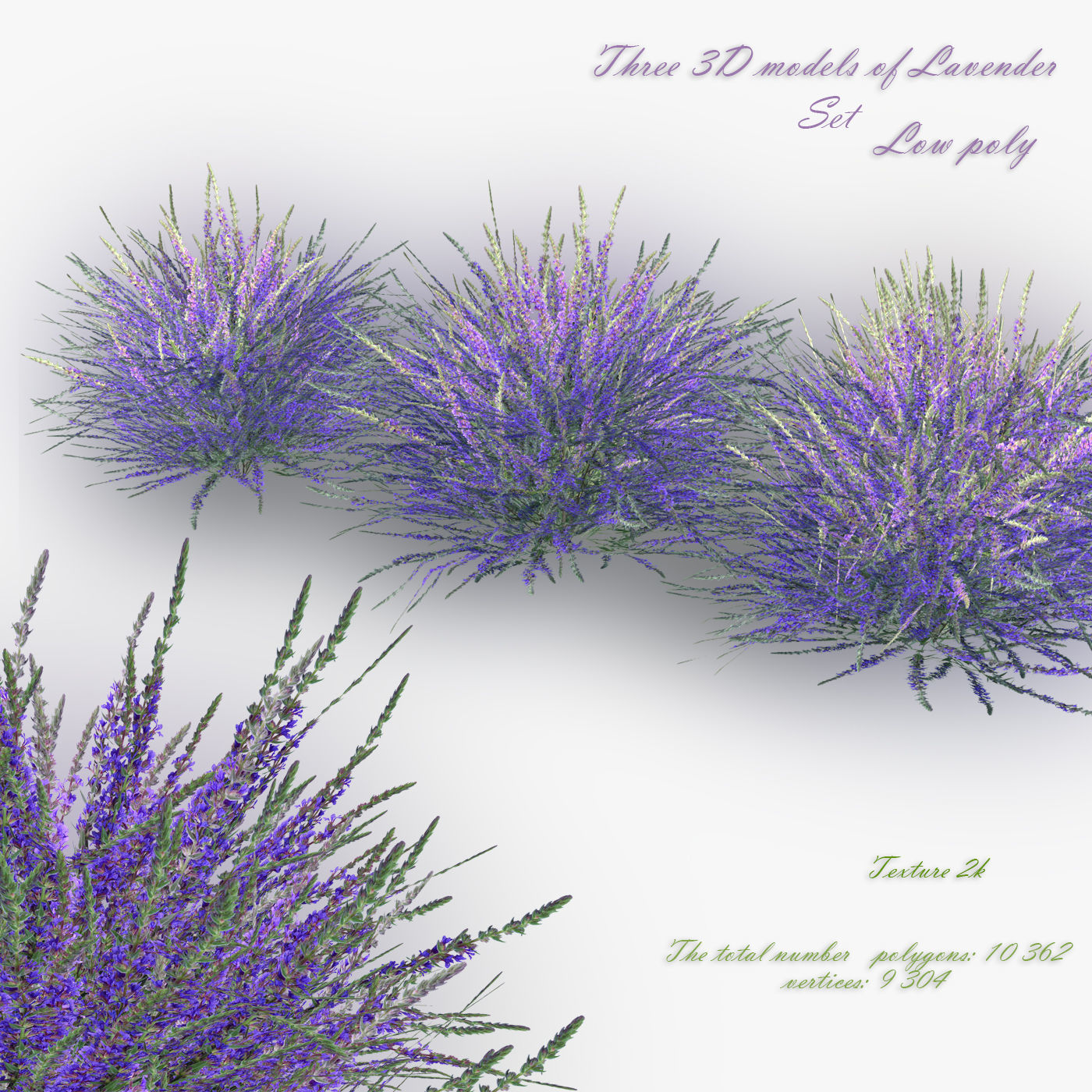 3d Model Low Poly Lavender Bush Cgtrader