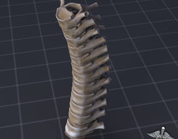 3D model Human Thoracic Vertebrae