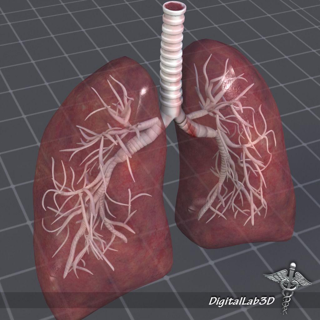 3d Lung Diagram - House Wiring Diagram Symbols •