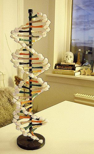 dna helix 3d model stl 1
