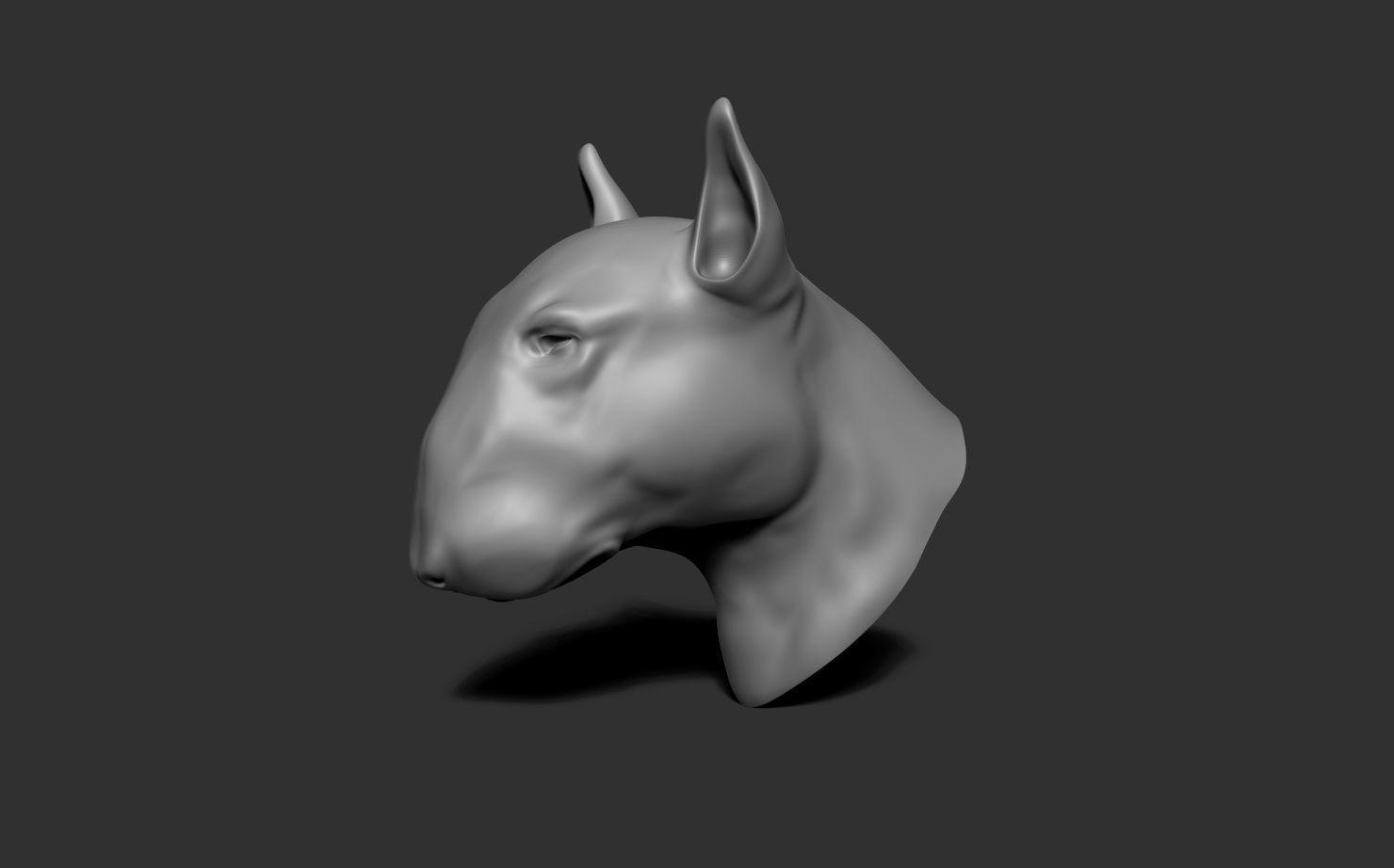 Dog Bull Terrier Head