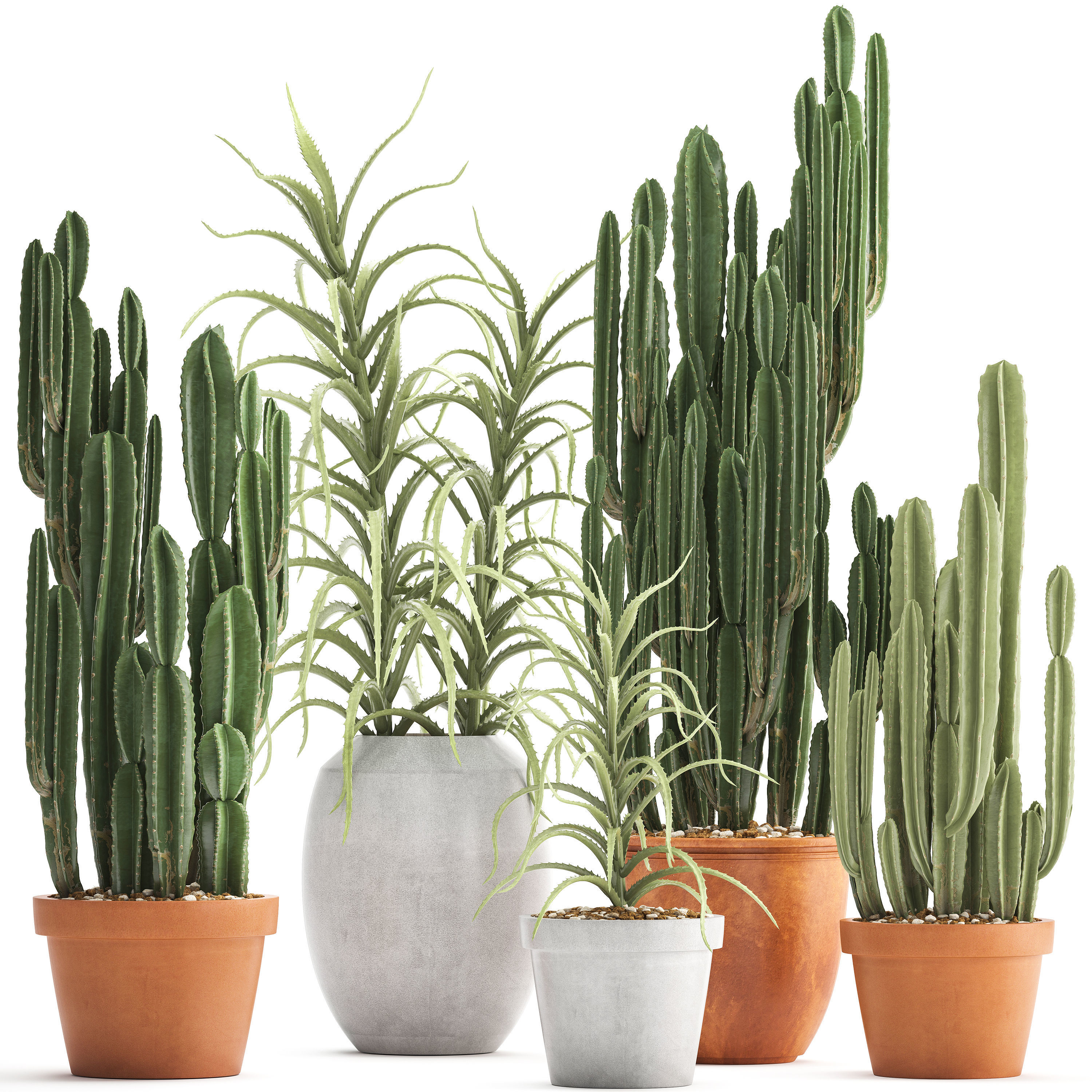 Collection of Exotic Cactus Plants 3