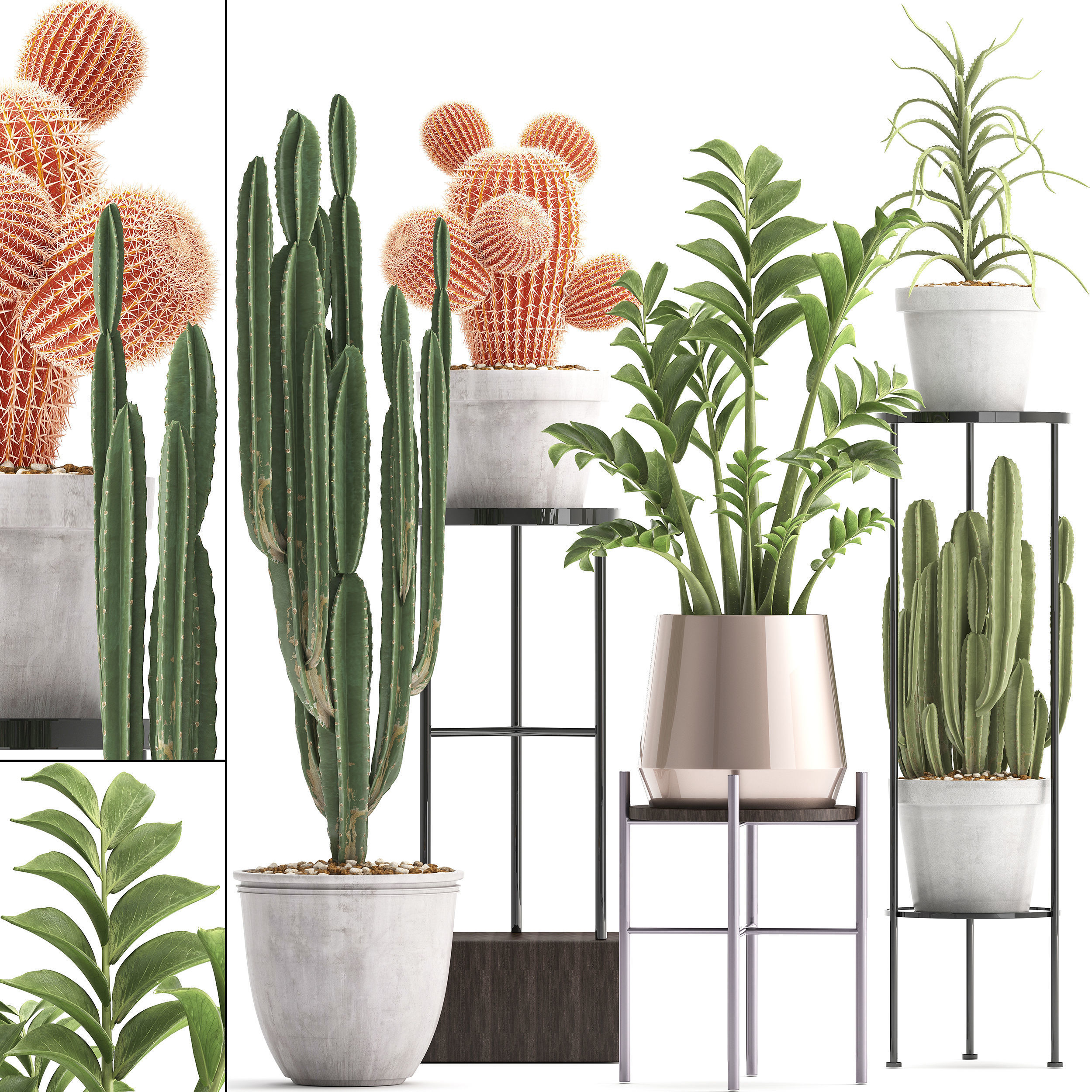 Collection of Exotic Cactus Plants 4