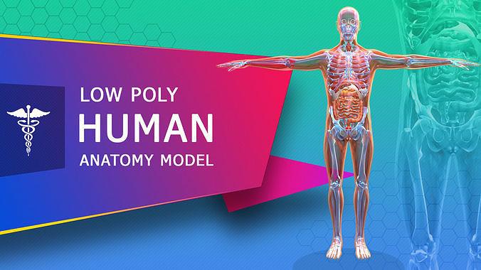 low poly human anatomy model 3d model obj mtl 3ds fbx stl blend dae 1