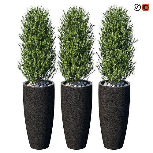 plant in the pot ii 3d model max obj mtl 1