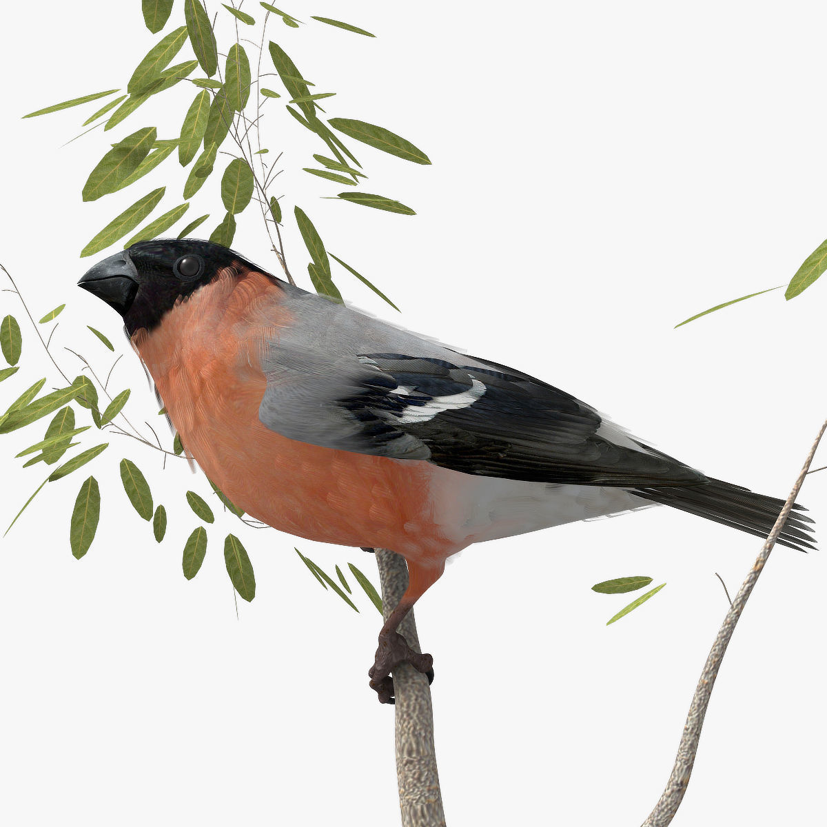 Eurasian Bullfinch - rigged - animated