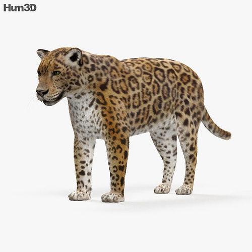 jaguar hd 3d model max obj mtl 3ds fbx c4d lwo lw lws 1
