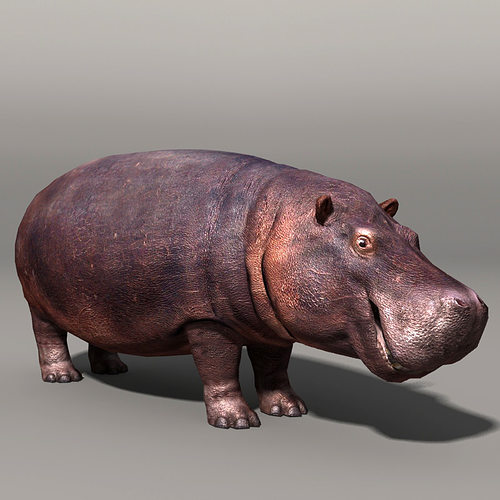 hippopotamus 3d model low-poly max obj fbx mtl 1