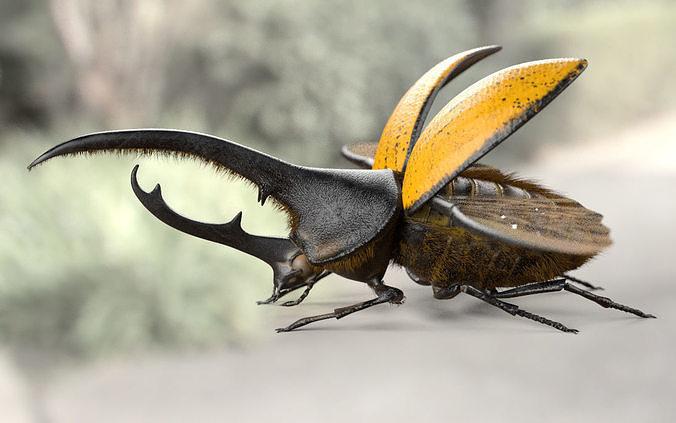 hercules beetle 3d model obj mtl 3ds fbx c4d stl dae 1