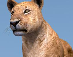 3D model Lioness