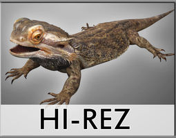 Bearded Dragon Lizard Pet 3D