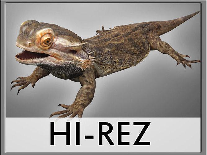 bearded dragon lizard pet 3d model max obj fbx mtl 1