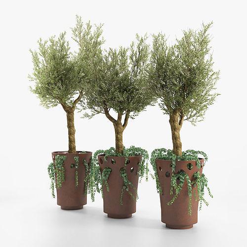 JARDINIERE GREEN PALACIO I  Olive Tree
