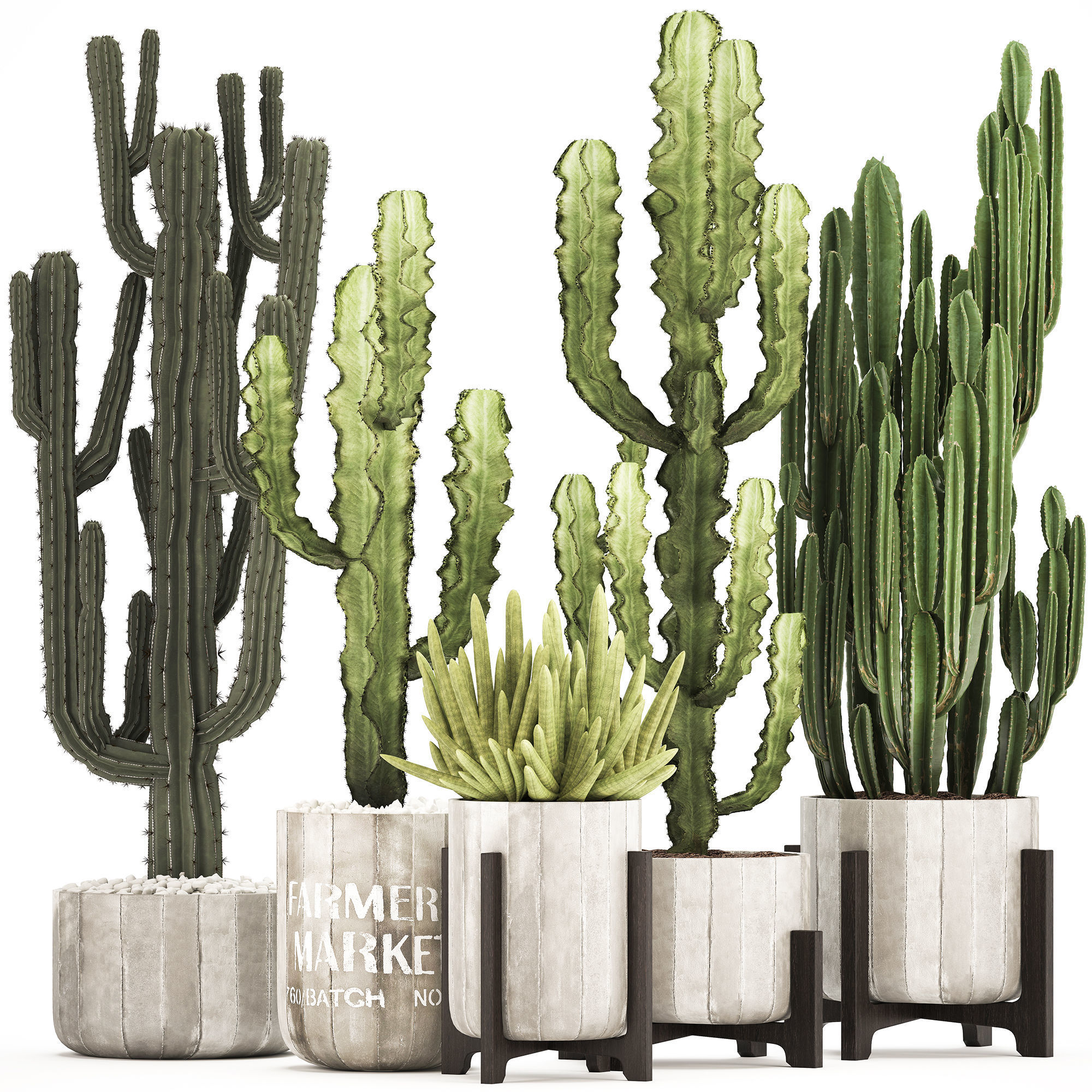 Collection of Exotic Cactus Plants 8