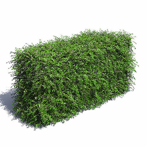 cotoneaster hedge with flowers 3d model max obj mtl mat 1