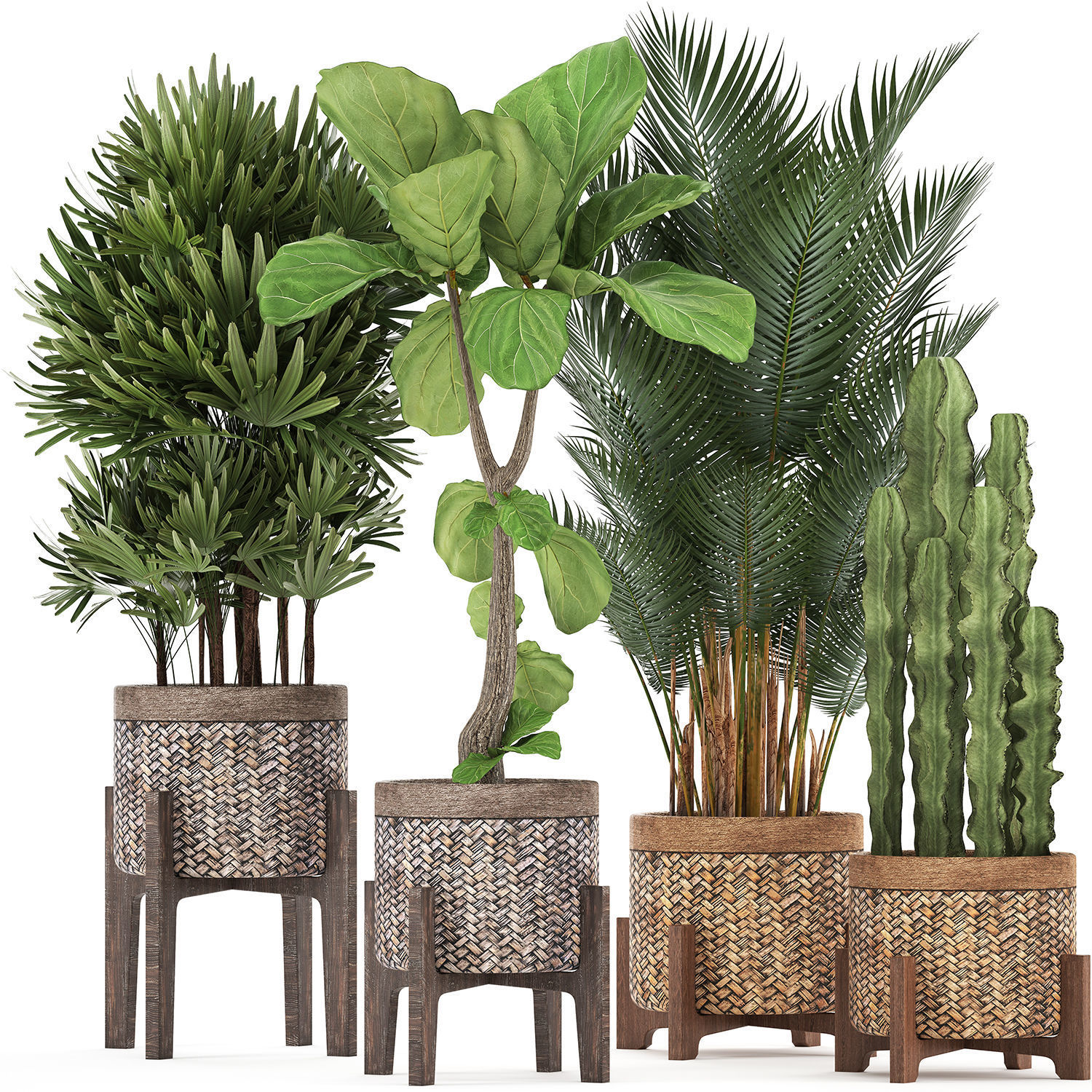 Collection of Exotic plants