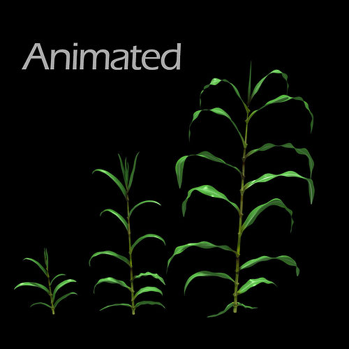 corn plant growth 3d model animated max obj mtl 1