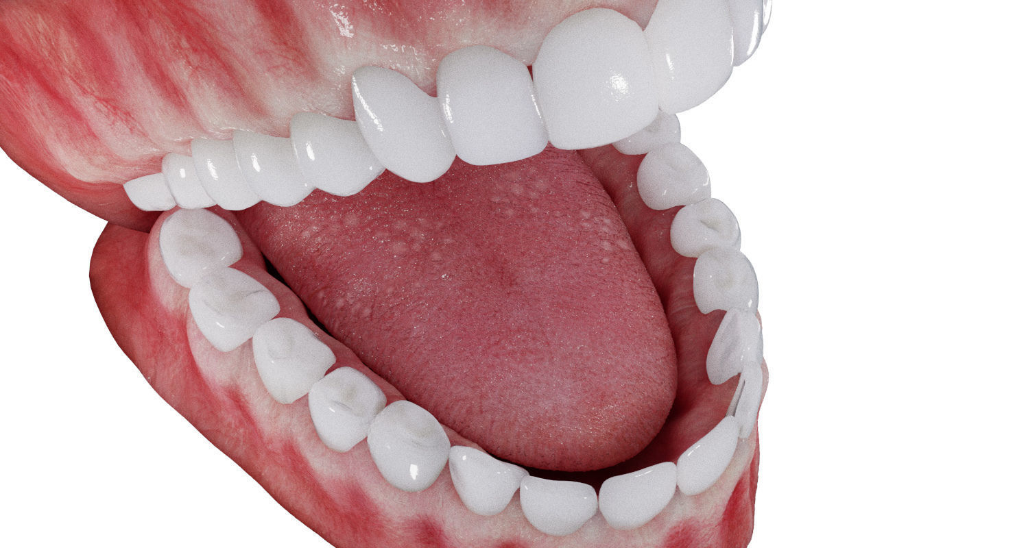 Photorealistic mouth gums and teeth