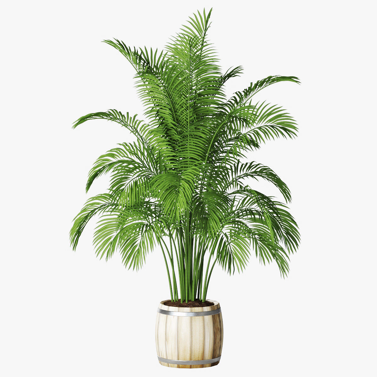 Palm 11