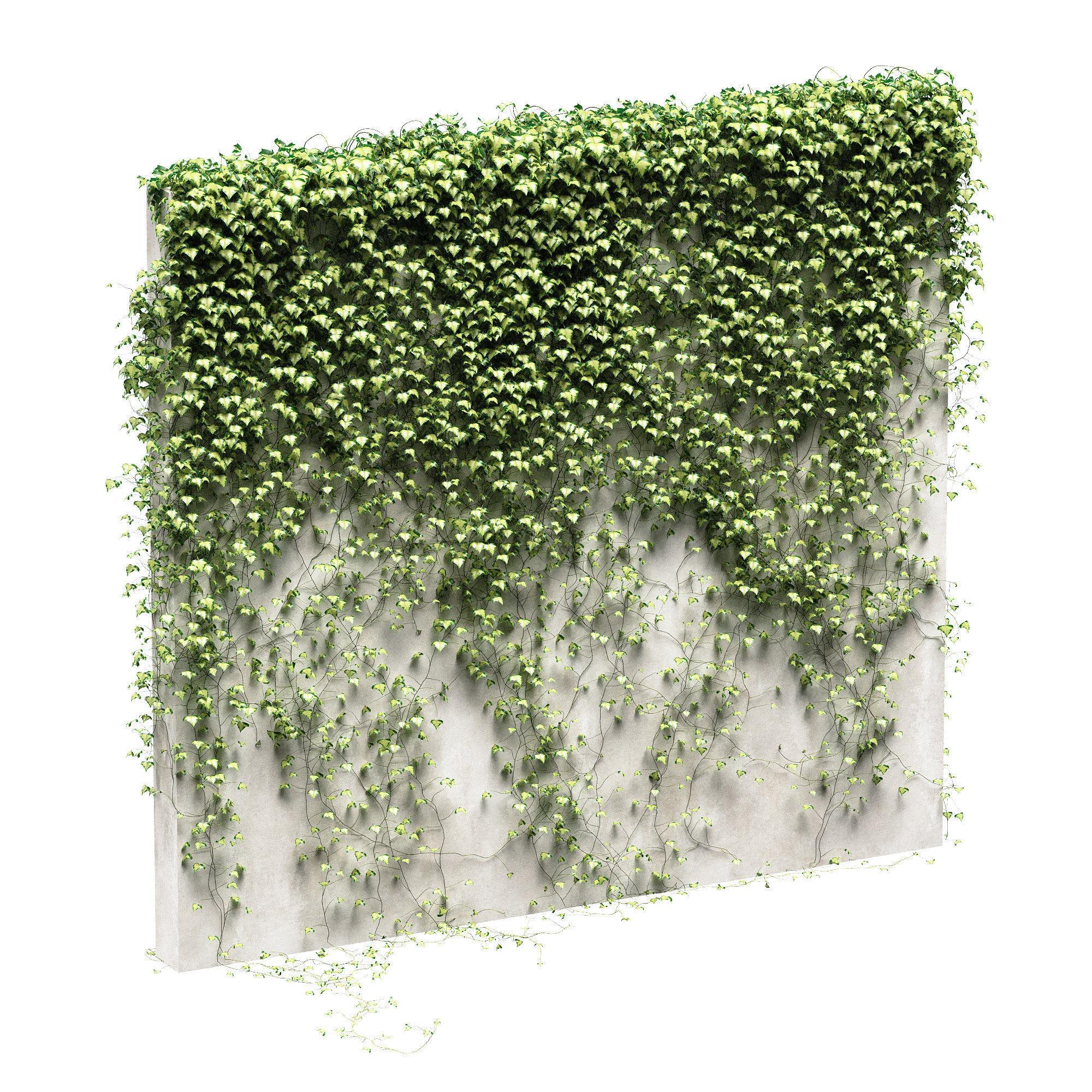 Ivy for fence v3