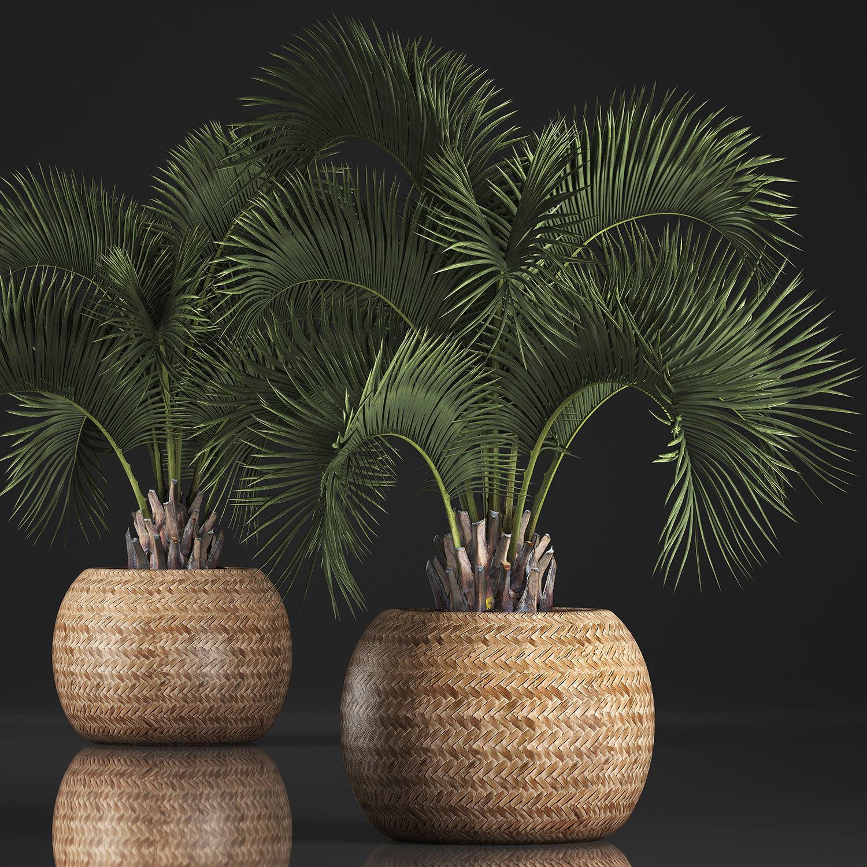 Decorative palm tree in a pot 5