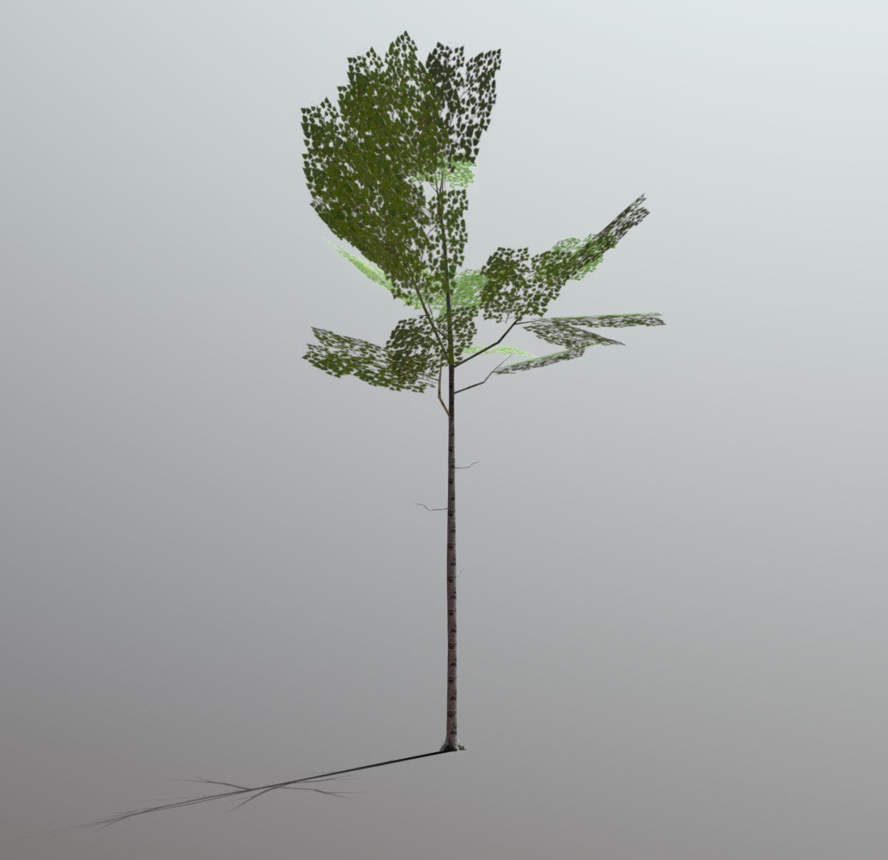 Superfuntimes Birch Tree