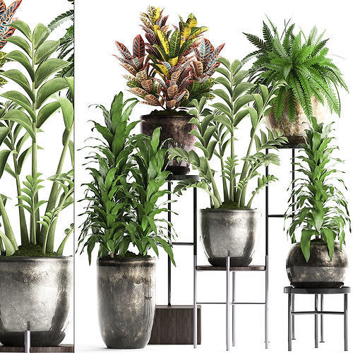 Collection Exotic plants 362