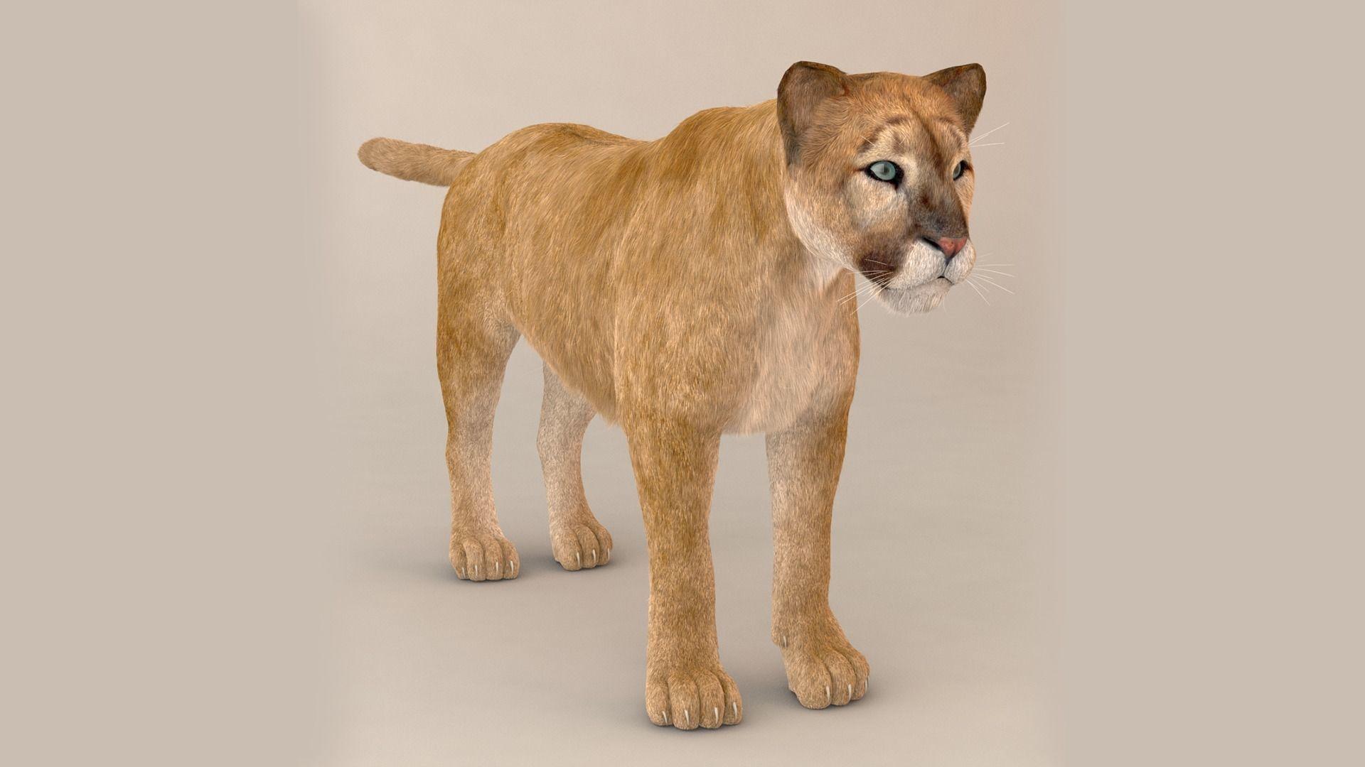 Puma Fur Model