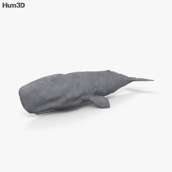 Sperm Whale HD