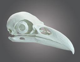 Rawen skull scan 3D Model