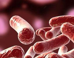 3D model Bacillus 02