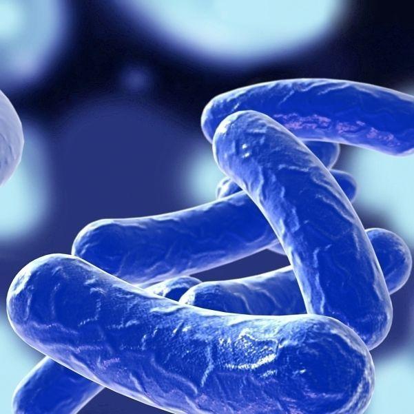 Bacillus 03 blue