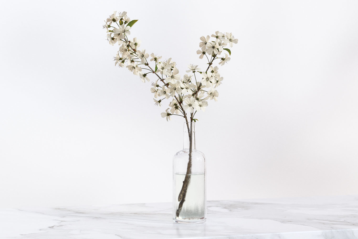 183 & Twig with white flowers in a glass vase   3D model