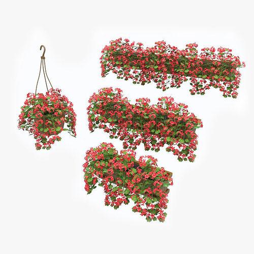 pelargonium box flower 3d model max obj mtl fbx 1