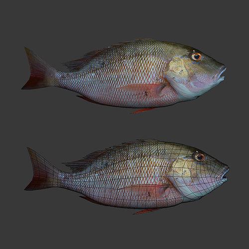fishs 3d model obj 1