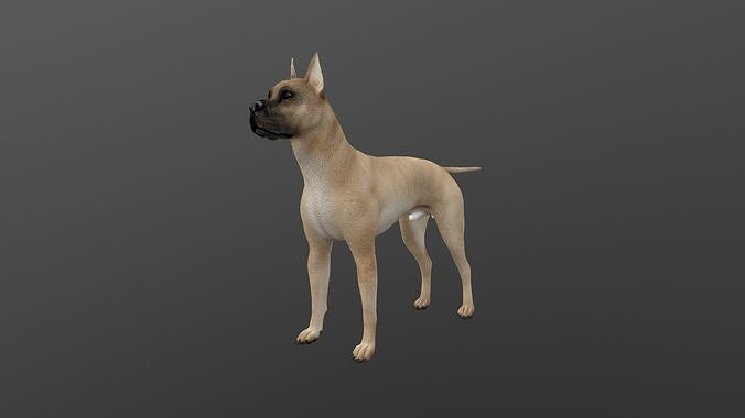 ANML-019 Dog