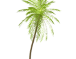 by 3D model Palm tree