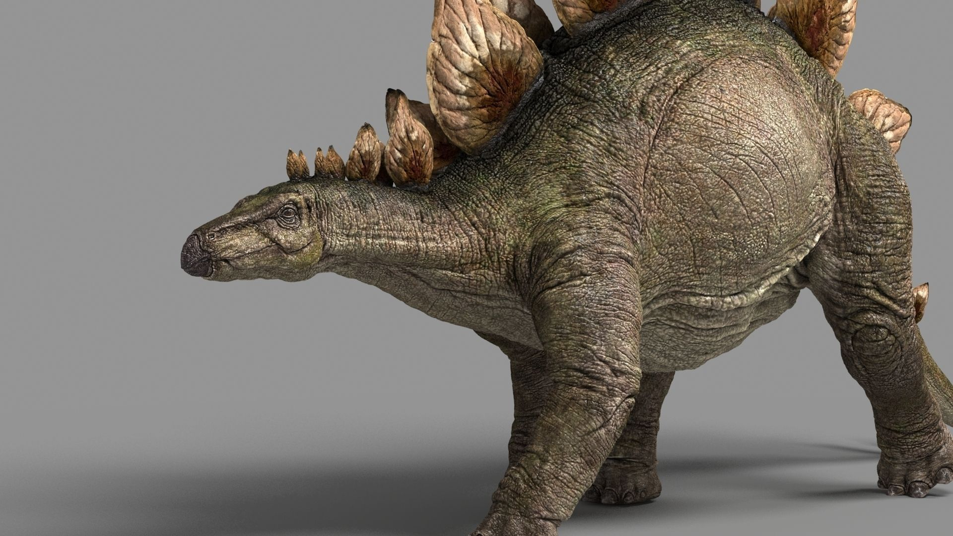 Stegosaurus astil 3d model animated rigged fbx for Mobel 3d download