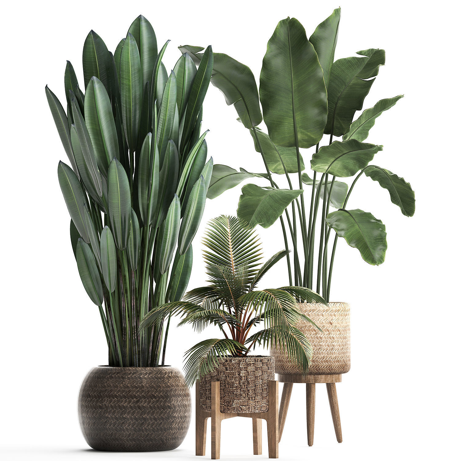 Collection of Exotic Plants 400