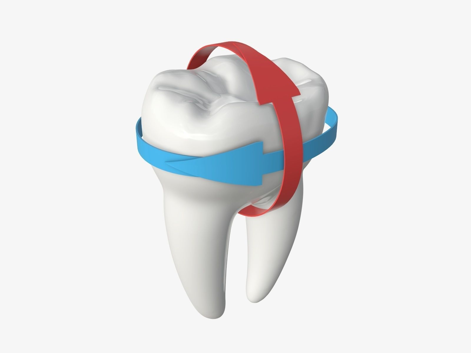 Tooth molars with arrows 01