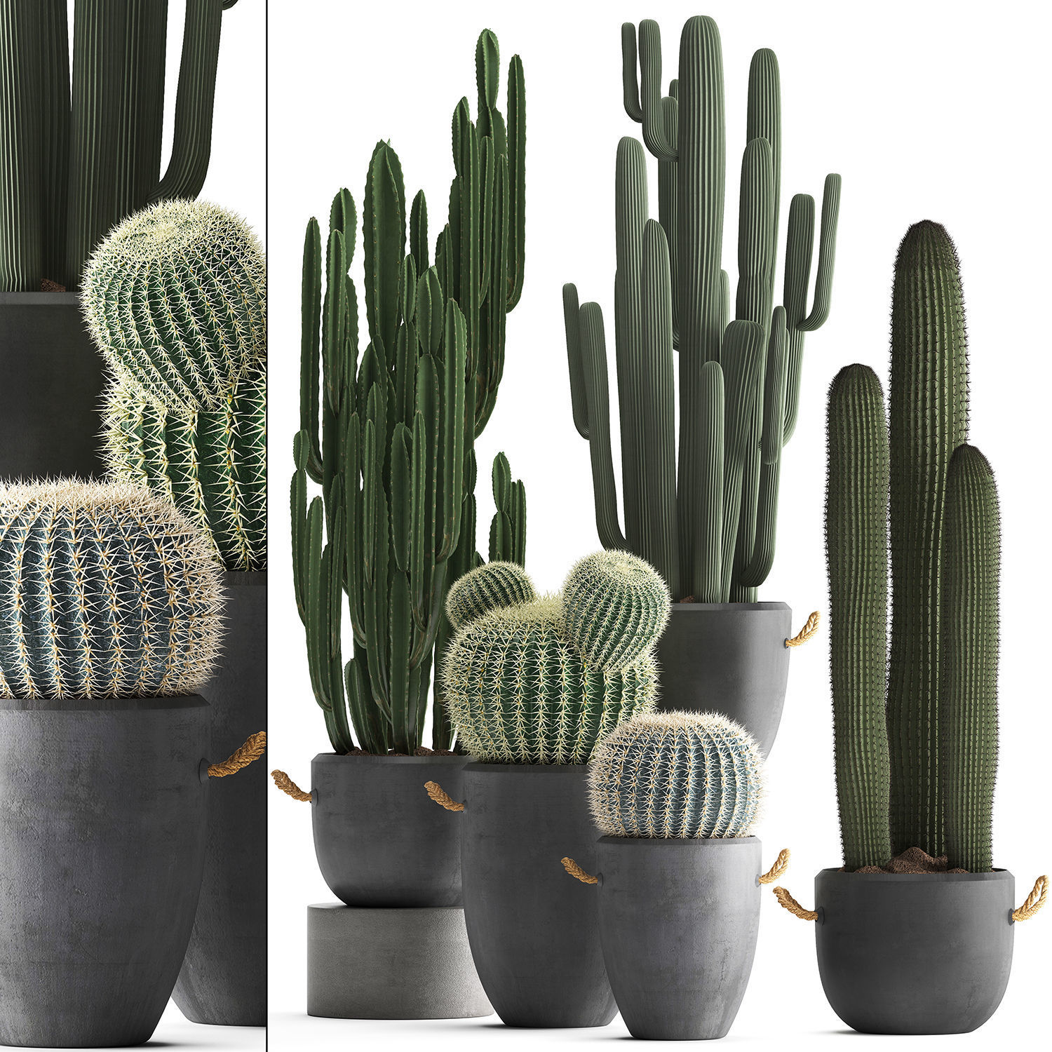 Collection of Exotic Cactus Plants 411