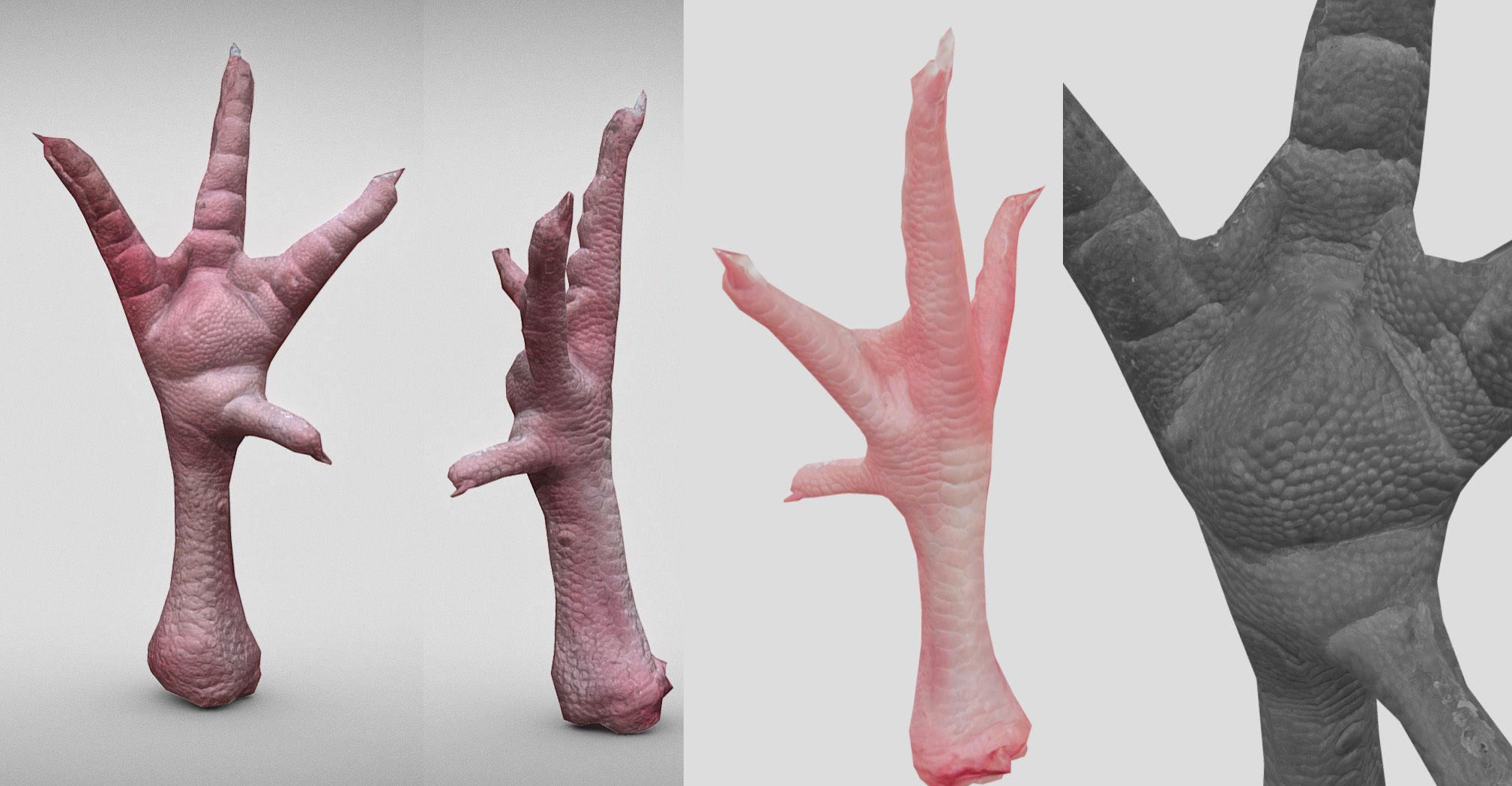 Raw Chicken feet 3dscan model